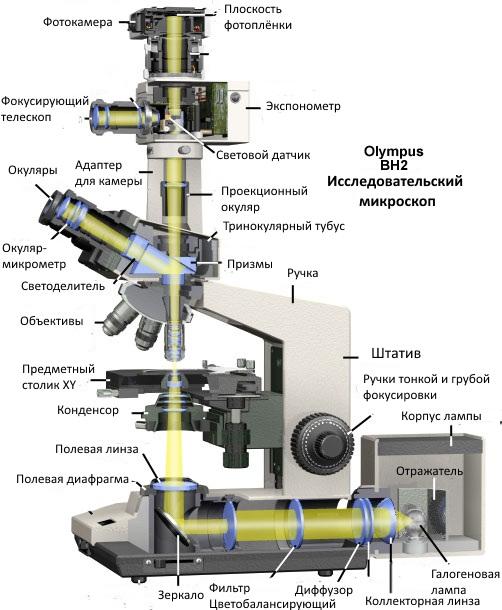 будова мікроскопа