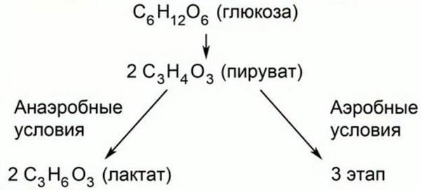 гліколіз глюкози