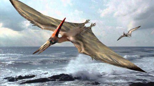 полет птеранодона