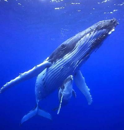 киты кормят своих детенышей