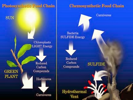 Chemosynthesis vs Photosynthesis