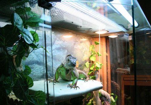 terrarium for iguana