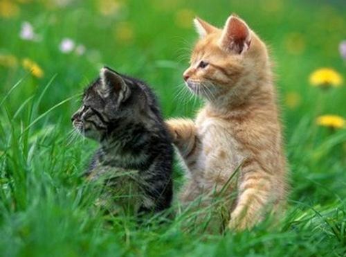 кішки друзі
