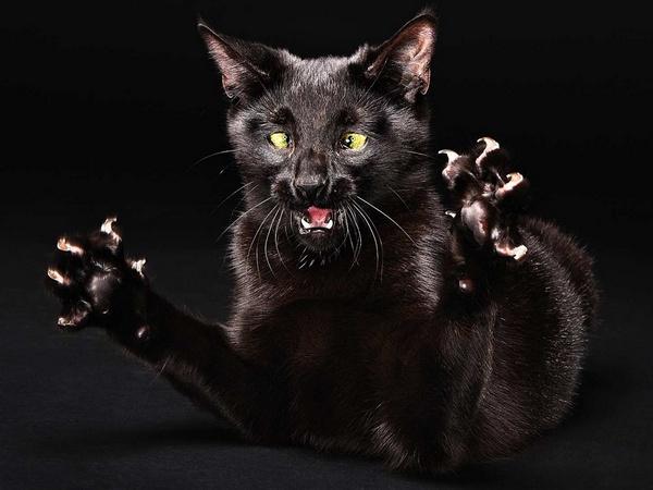 кішка гризе кігті