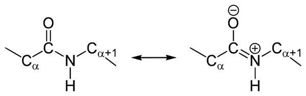 структура пептидного зв'язку