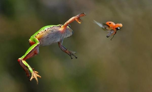 жаба стрибає