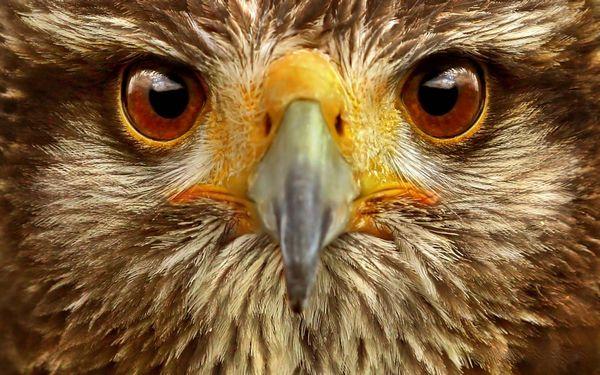 око птиці
