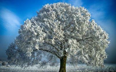 дерево взимку