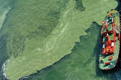 Озеленення під водою