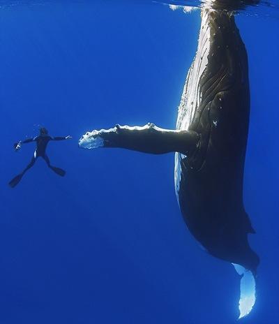 горбатый кит и человек