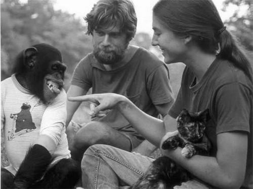 шимпанзе Уошо