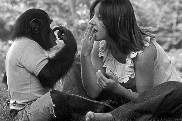 Уошо шимпанзе