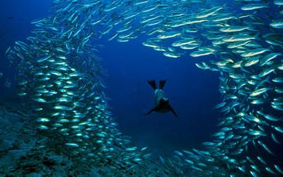 Життя в глибинах океану