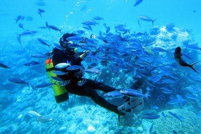 аквалангист среди рыб