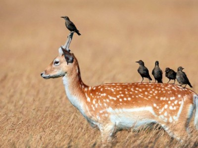 симбиоз животных