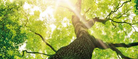 Устойчивость в природе