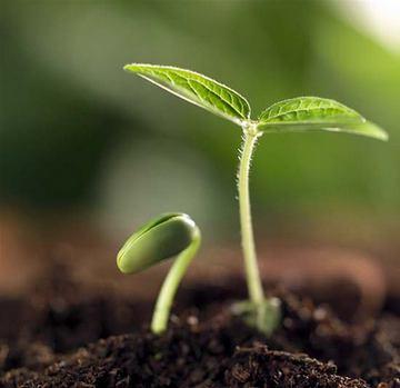 растения растет