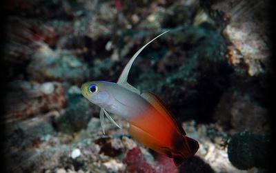 рыбка антенна