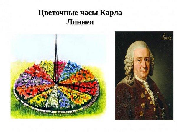 Цветочные цветы